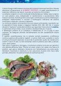Guida all'alimentazione nel nuoto - Preparazione Atletica - Page 4