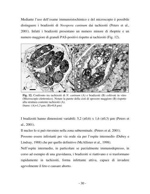 neospora caninum - Ordinevetverona.it