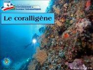 Le coralligène - Hippocampe Club de Massy