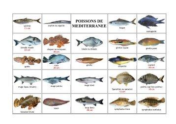 La fiche d couverte natu - Grand poisson de mer ...