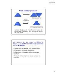 Ciclo celular y Cáncer - DePa