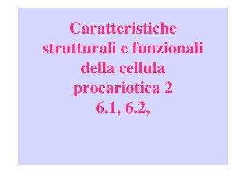 Struttura Batteri 2 - Microbiologia Generale