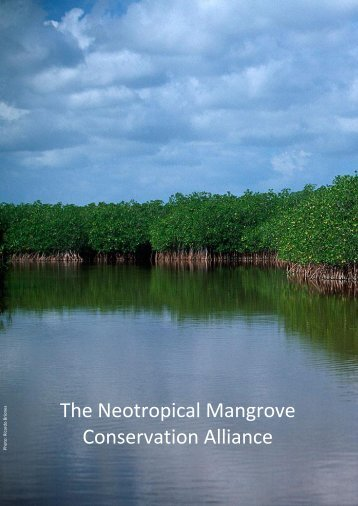 The Neotropical Mangrove Conservation Alliance - BirdLife ...