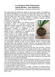 La coltivazione delle Phalaenopsis metodo Moniker - semi idroponica