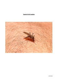 Kapitel 01.08: Insekten - Hoffmeister.it