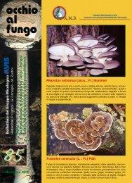 avis_notizie_gen_09_inserto_micologi(.Pdf 579 KB)