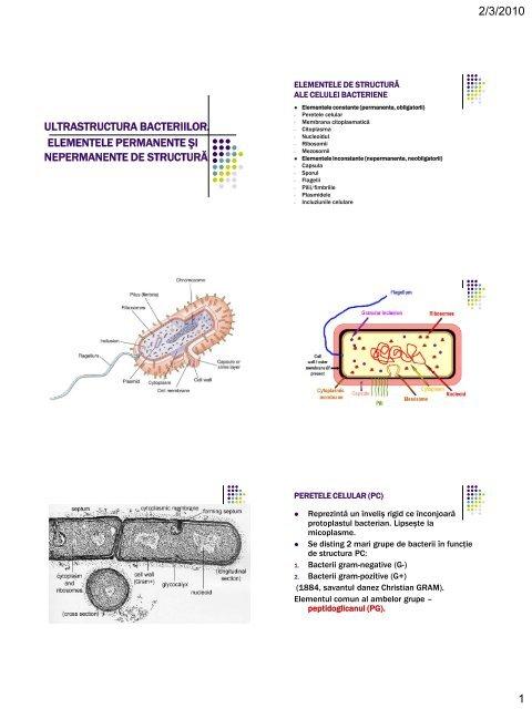 papilloma virus 16 e gravidanza tratamentul negilor perineali