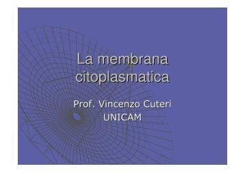 La membrana citoplasmatica - Lenciclopedia.it