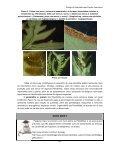 Biologia e Sistemática das Plantas Vasculares - UFPB Virtual - Page 7