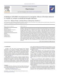 Arabidopsis LOS5/ABA3 overexpression in transgenic tobacco ...