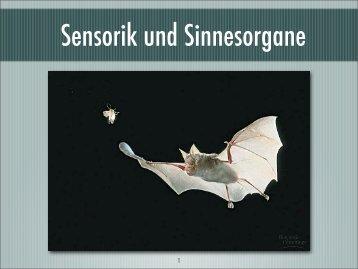 Sensorik und Sinnesorgane - Israng.ch