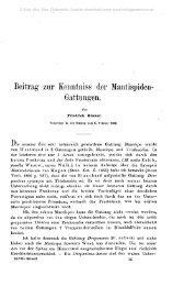 Beitrag zur Kenntniss der Mantispiden- Gattungen,