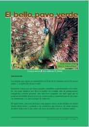 El bello pavo verde - Las aves más bellas del mundo