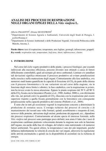Analisi dei processi di respirazione negli organi epigei della Vitis ...