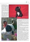 BOULEDOGUE FRANCESE - di Fosso Corno - Page 3
