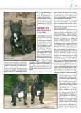 BOULEDOGUE FRANCESE - di Fosso Corno - Page 5