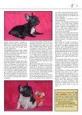 BOULEDOGUE FRANCESE - di Fosso Corno - Page 7