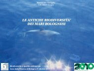 Le antiche biodiversità dei mari bolognesi - CNR Area della Ricerca ...