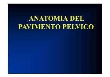1357125200-Anatomia Pelvica.pdf