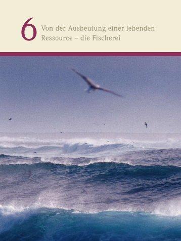 Von der Ausbeutung einer lebenden Ressource – die Fischerei