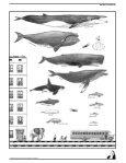 ejercicio a - delfines y ballenas 3d - Page 7