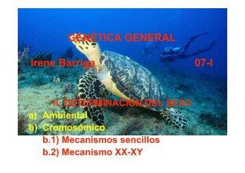 b) Mecanismos XX-XY