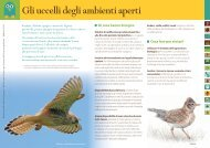 Gli uccelli degli ambienti aperti - Provincia di Milano