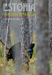 Nel cuore della taiga - Estonian Nature Tours