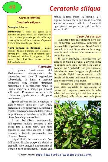 Ceratonia siliqua - Piante spontanee in cucina