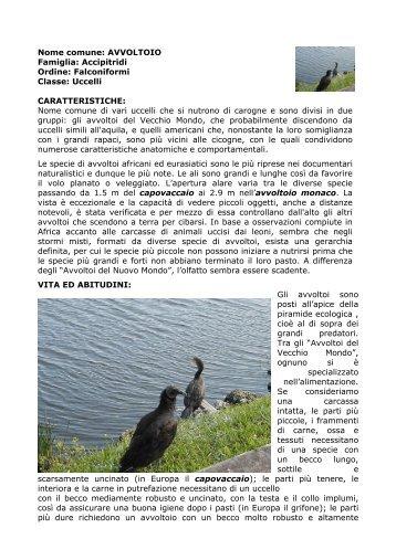 Avvoltoio Nome comune di vari uccelli che si nutrono ... - PrimaLinea
