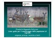 Linee guida per il monitoraggio delle popolazioni di Capriolo ...