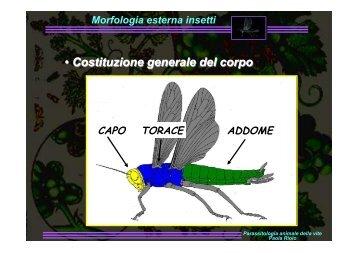 Morfologia esterna