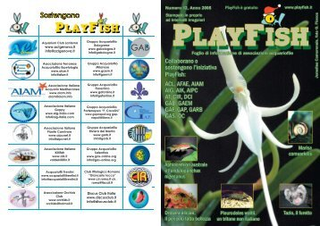 PlayFish - Numero 12 - AIPC