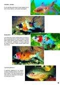Guida 67 - Il Regno del Pesce Rosso - Page 5