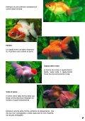 Guida 67 - Il Regno del Pesce Rosso - Page 7