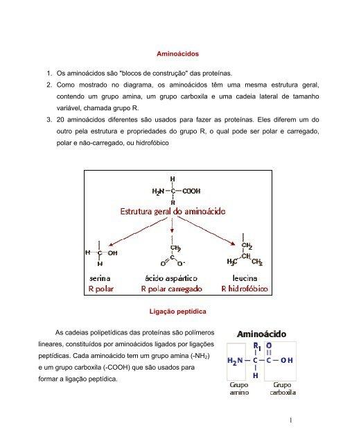 1 Aminoácidos 1 Os Aminoácidos São Blocos De Construção