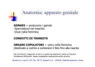 Anatomia: apparato genitale