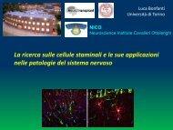 Cellula staminale - fondazione un passo insieme onlus