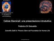 Cellule Staminali - Phoenix Stem Cell Foundation