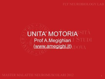 Slides - Megighian Lab