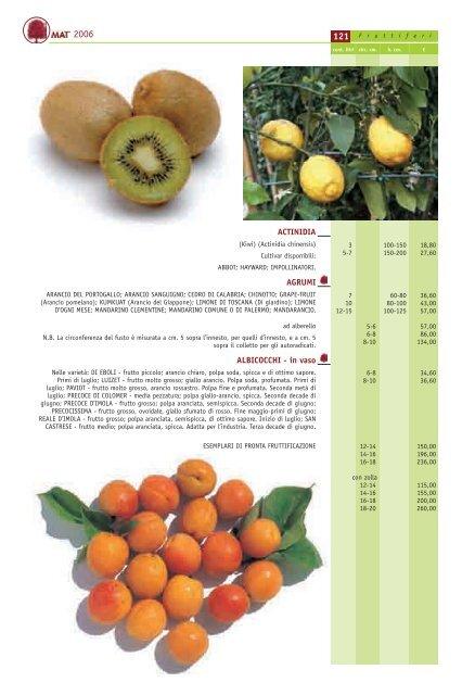 Albicocco Perla su vaso da 26 pianta da frutto max 200 cm 4 anni