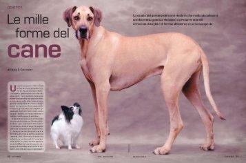 GENETICA Lo studio del genoma del cane rivela in che ... - Kataweb