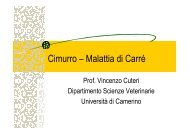 (Microsoft PowerPoint - Cimurro [modalit\340 compatibilit ... - Cuteri.eu
