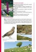 Tutela degli habitat e dei rapaci del Monte Labbro e dell ... - Europa - Page 4