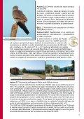 Tutela degli habitat e dei rapaci del Monte Labbro e dell ... - Europa - Page 6