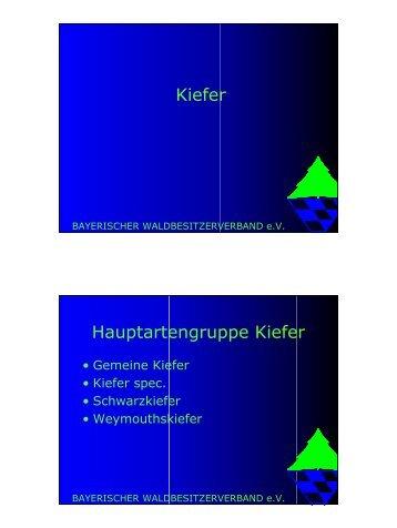Hauptartengruppe Kiefer - Der Sächsische Waldbesitzerverband eV
