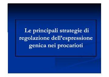 Le principali strategie di regolazione dell'espressione genica nei ...