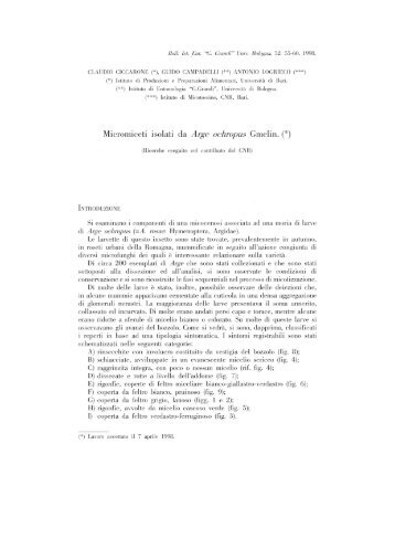 Micromiceti isolati da Arge ochropus Gmelin - Bulletin of insectology