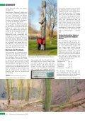Reinhardswald - Seite 2