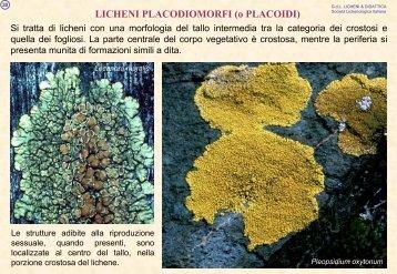 Didattica dei Licheni - Protezione Civile - Provincia di Brindisi